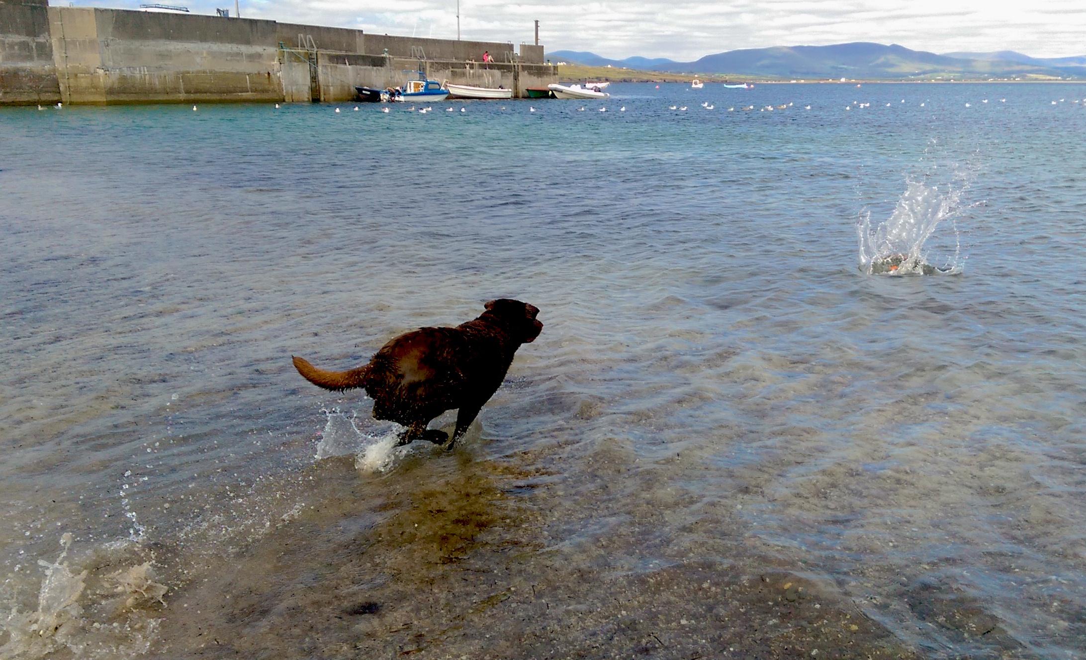 110 Wasserhund3