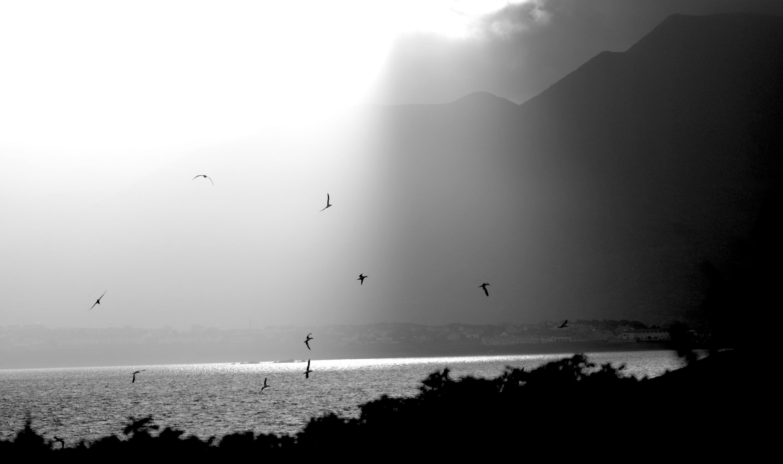 Sonnenlicht auf dem Meer mit Vögeln