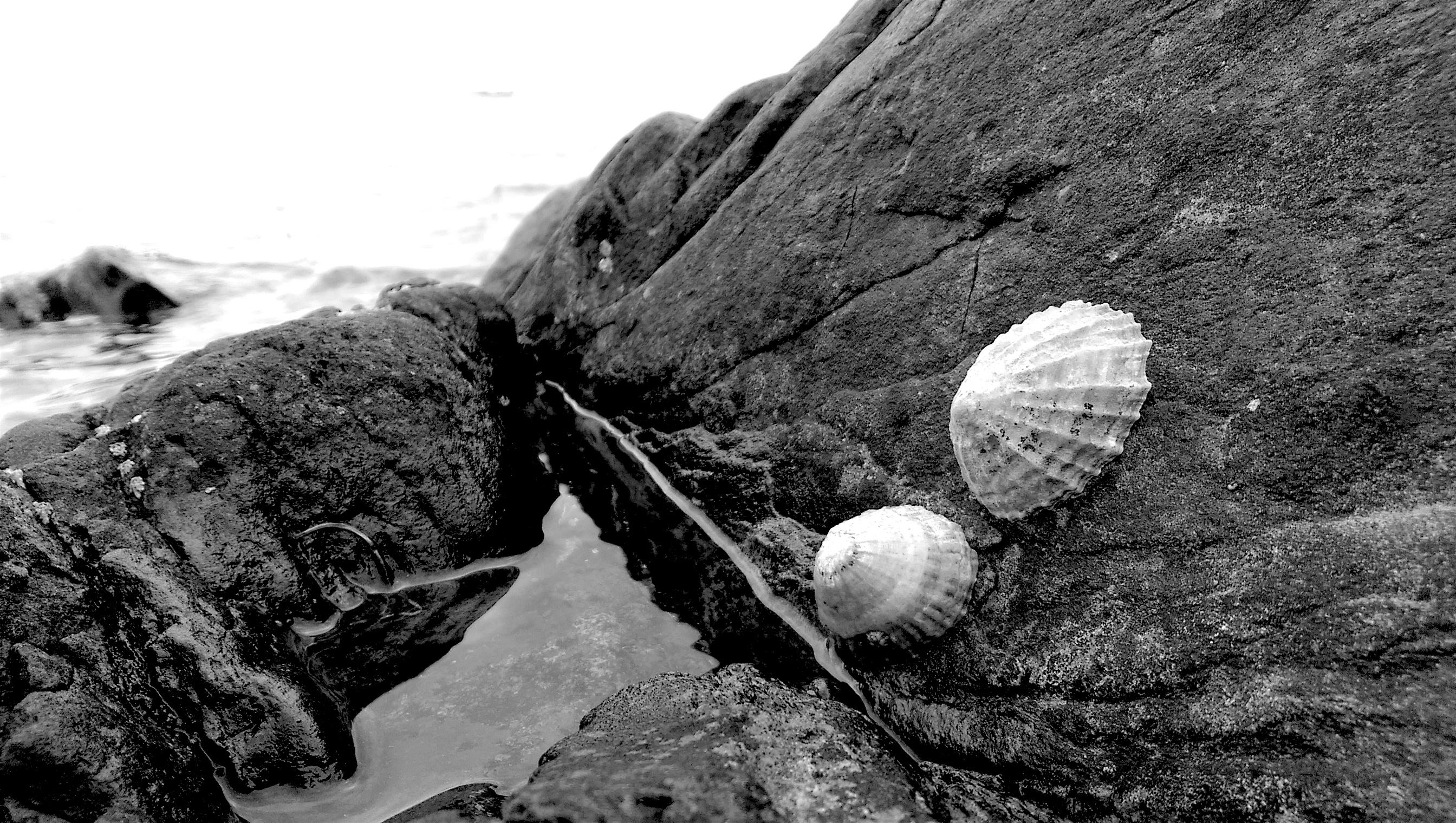 Muscheln auf Felsen
