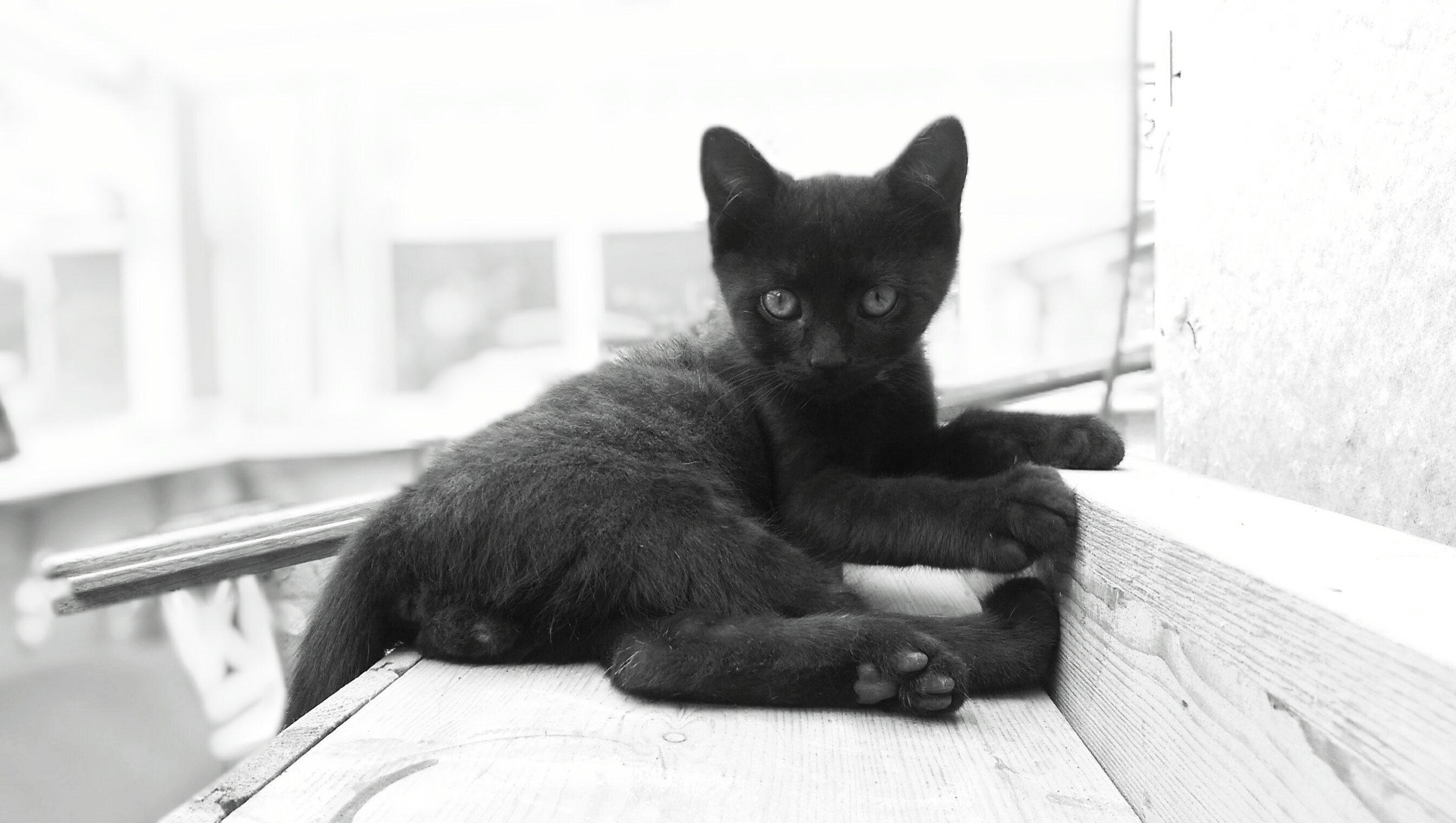 Schwarzes Kätzchen