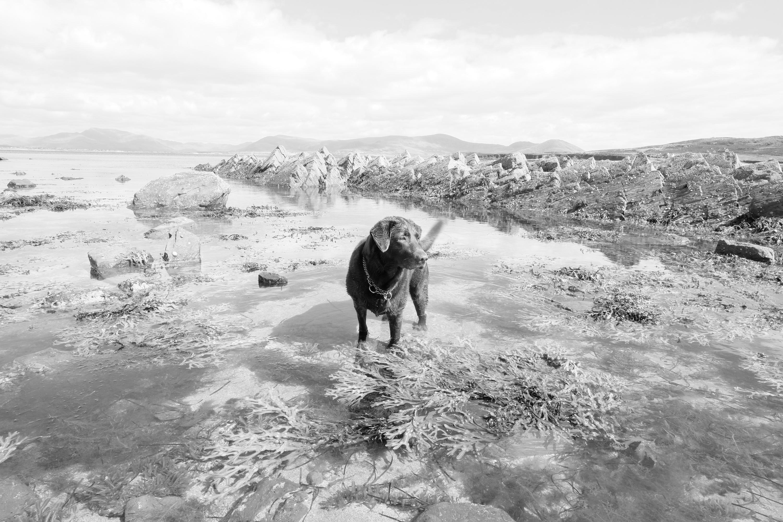 Hund im Wasser bei Ebbe